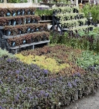 Select Perennials