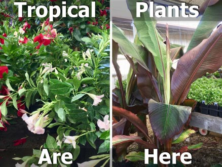 tropical plants are here
